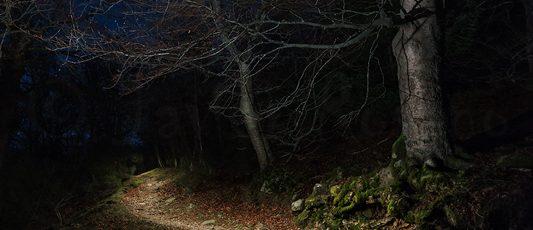La entrada al bosque
