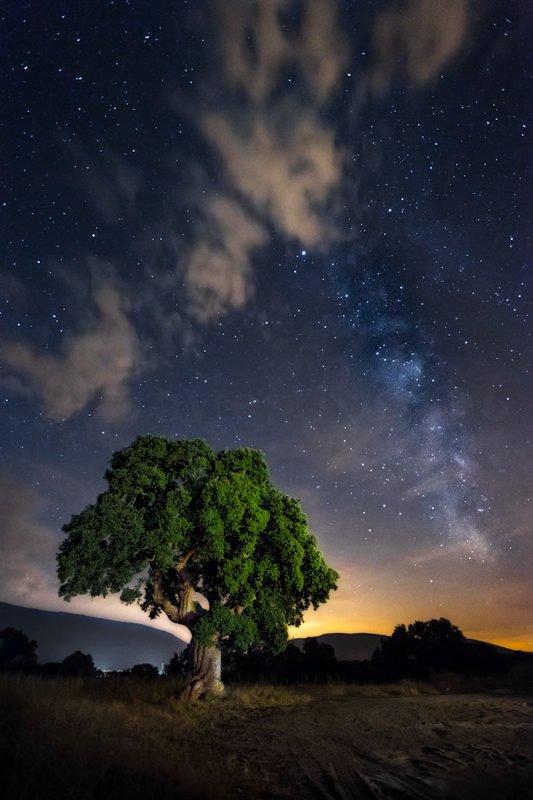 Fotografía nocturna. La encina y la vía