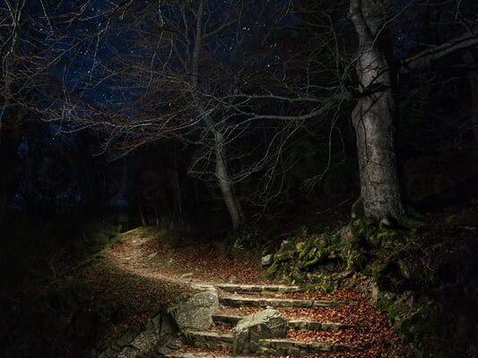 Fotografía nocturna. La entrada al bosque