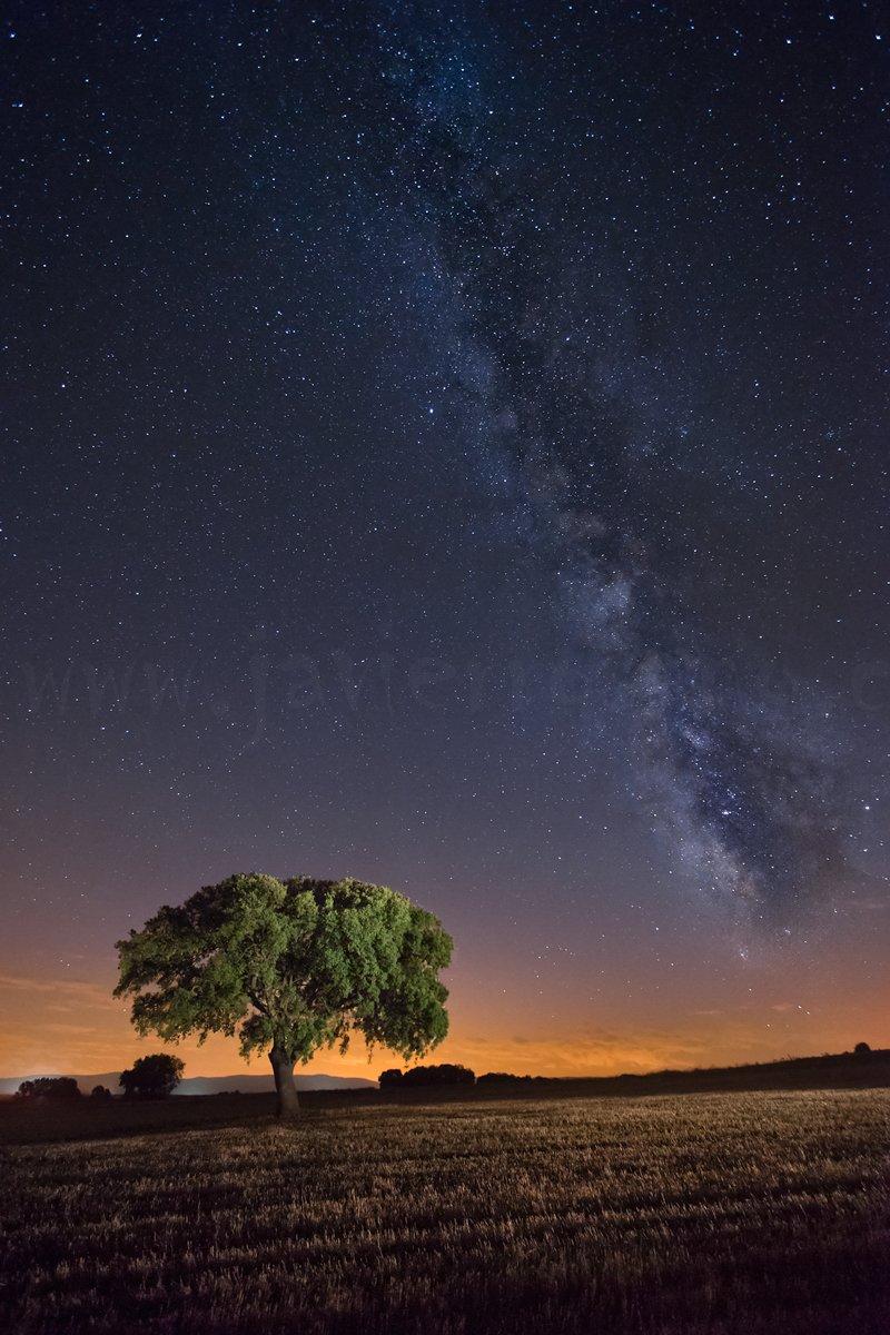Fotografía nocturna. La encina y la vía (II)