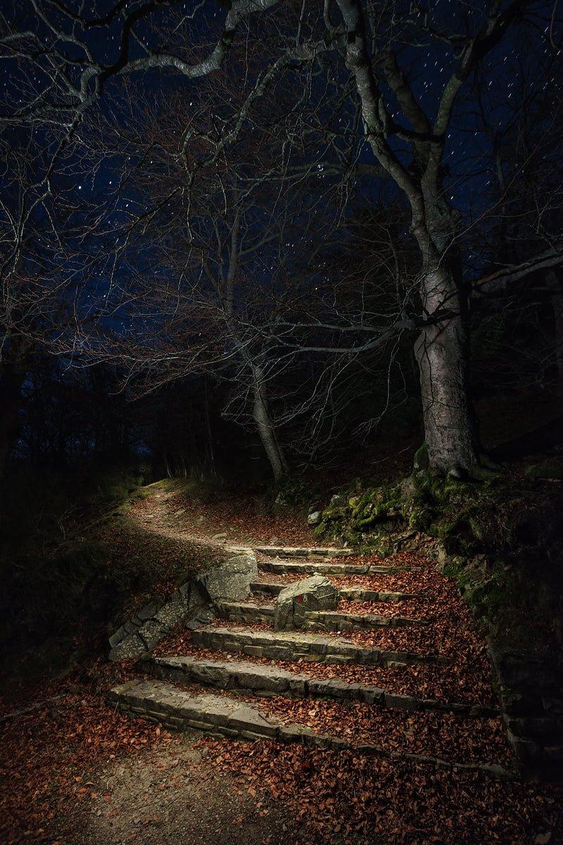 La entrada al bosque. Fotografía nocturna